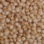Quinoa, un cereal sin gluten y de fácil digestión