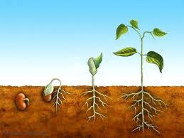 Abona el terreno para alimentar tus propósitos