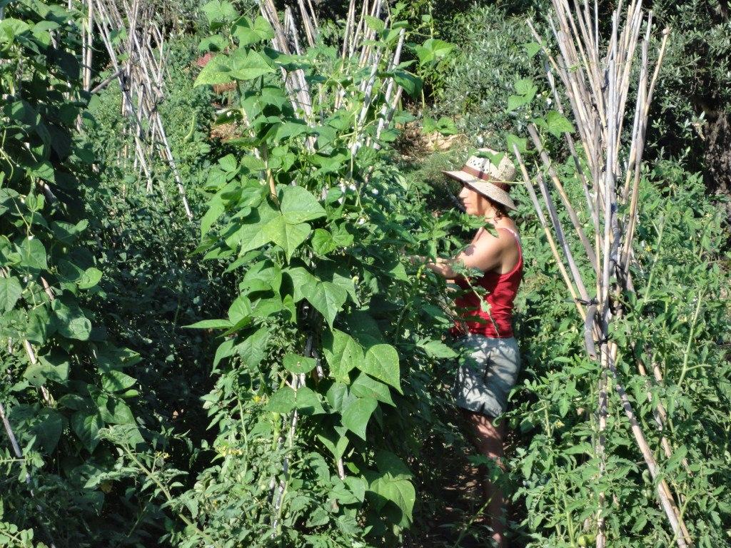Mentxu da Vinci entre tomateras