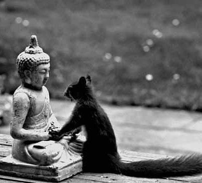 meditar.buda,ardilla10_n