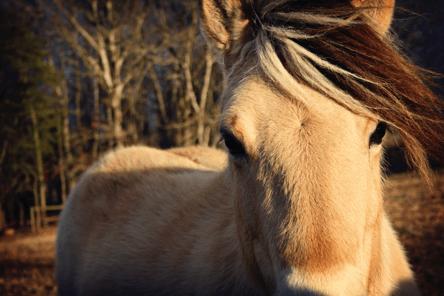 metafora pnl caballo motivarte para adelgazar