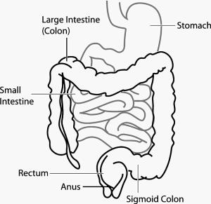 mejorar microbiota intestinal