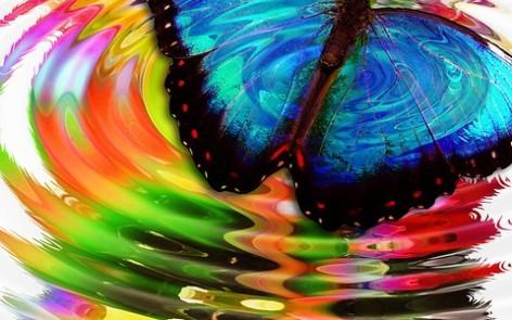 mariposa transformarse adelgazar