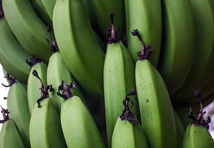platano o banana verde almidon resistente tipo 2 microbiota