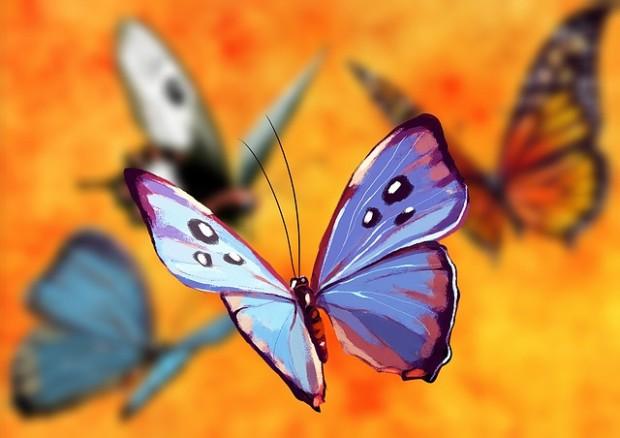 butterfly-1073162_640