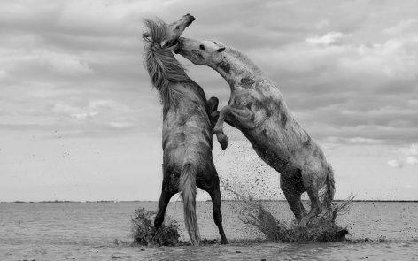 caballo expresar las emociones